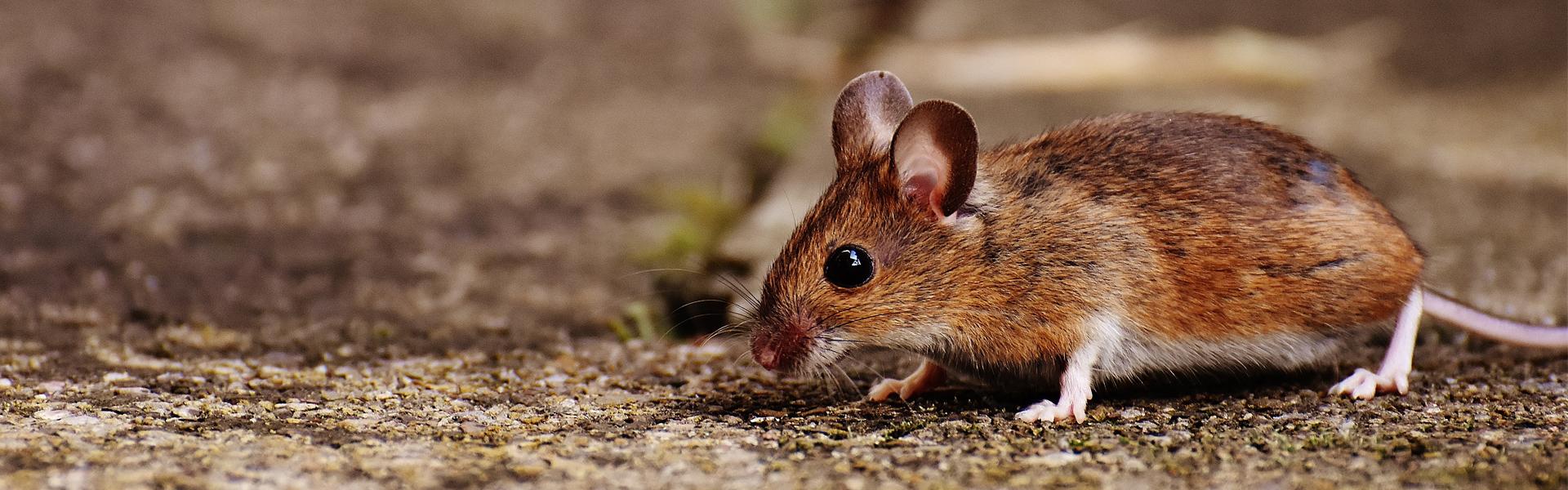 Slider-House-Mouse