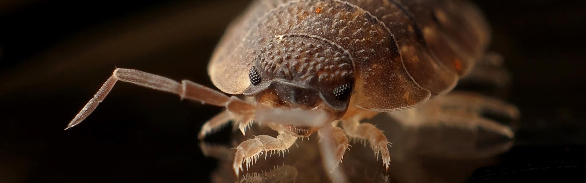 Slider-Pest